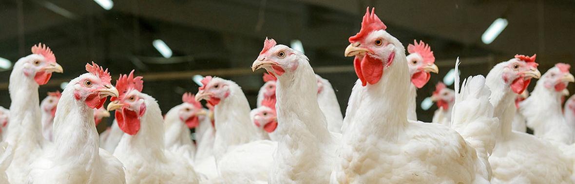Моющие средства для птицепереработки